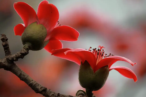 流传几千年的中国红真的可以辟邪吗?